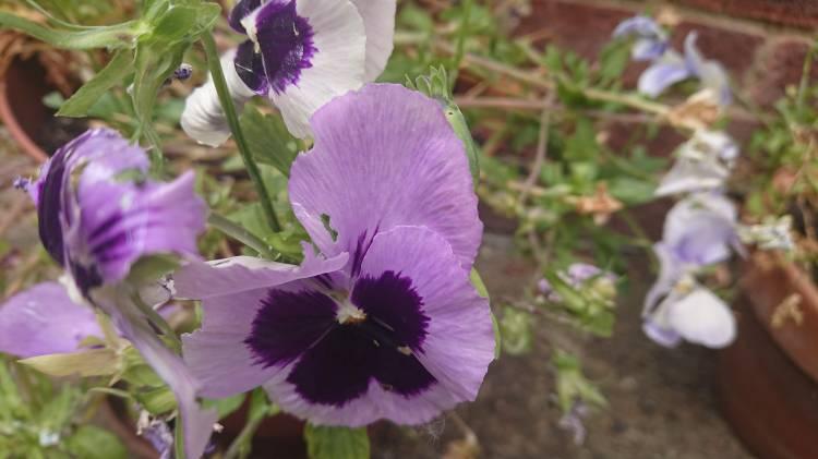 Day Three flower
